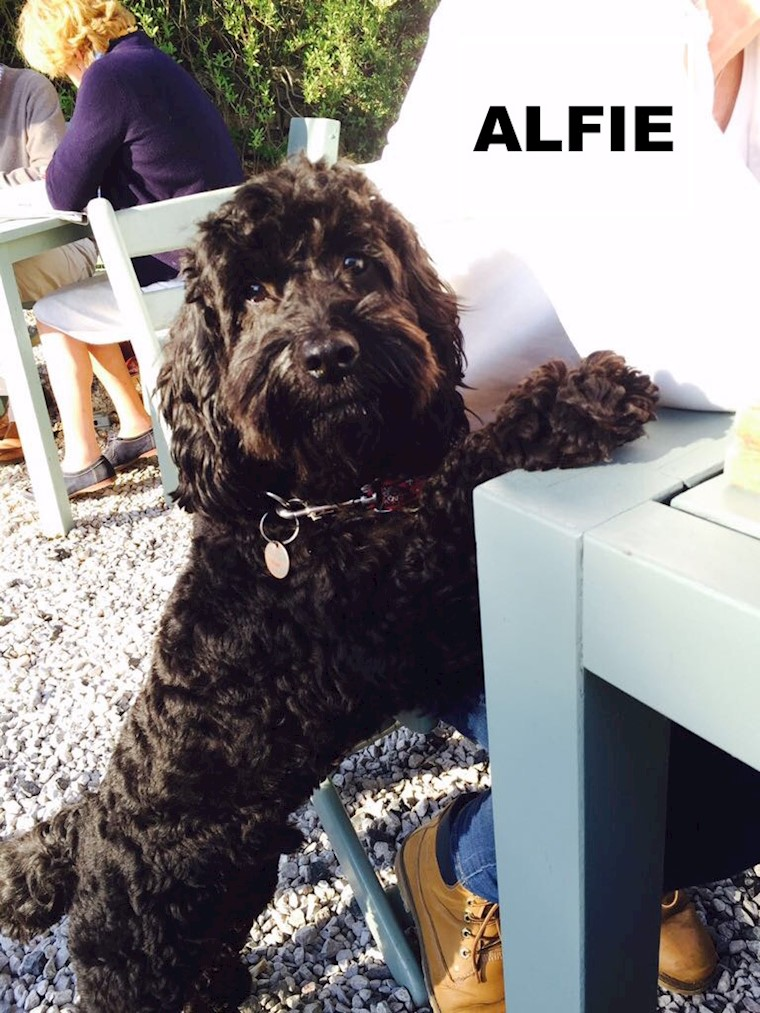 Meet our Testing Team - Alfie