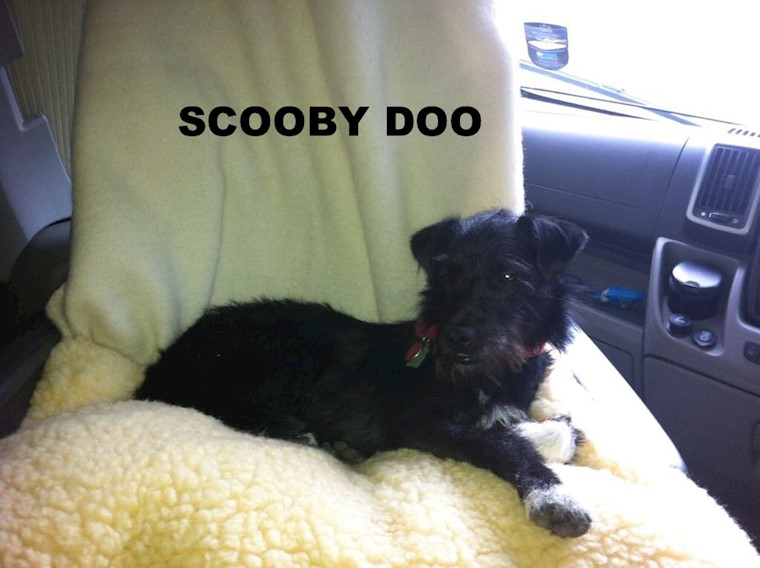 Meet our Testing Team - Scooby Doo