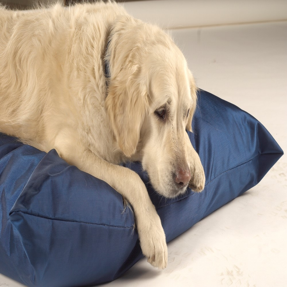 Trojan Mattress Waterproof Dog Bed - Blue