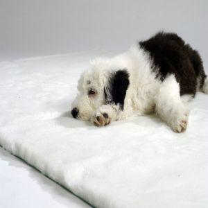 Traditional Bed   White Vet Bedding