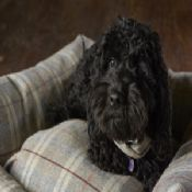 Tweed Wool Cosy Dog Bed - Light